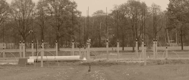 Gevonden! Daar is de haas (het is een echte), bij de antennes in Eibergen. Foto: Anne Geene (voor De Correspondent)