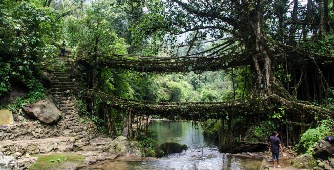 Bruggen van boomwortels (de Ficus Elastica) in Cherrapunji (India).