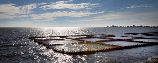 Met de proef Marker Kwelderwerken wordt onderzocht of het mogelijk is om met de aanleg van rijshouten dammen lokaal slib vast te leggen. Achter de dammen ontstaat een luwtegebied waar oever- en waterplanten kunnen groeien. Foto: Maarten Hartman