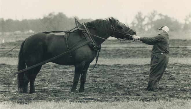 Canada, 1988. Een opstandig paard tijdens de 75e ploegwedstrijd. Foto: Dick Loek / Getty Images