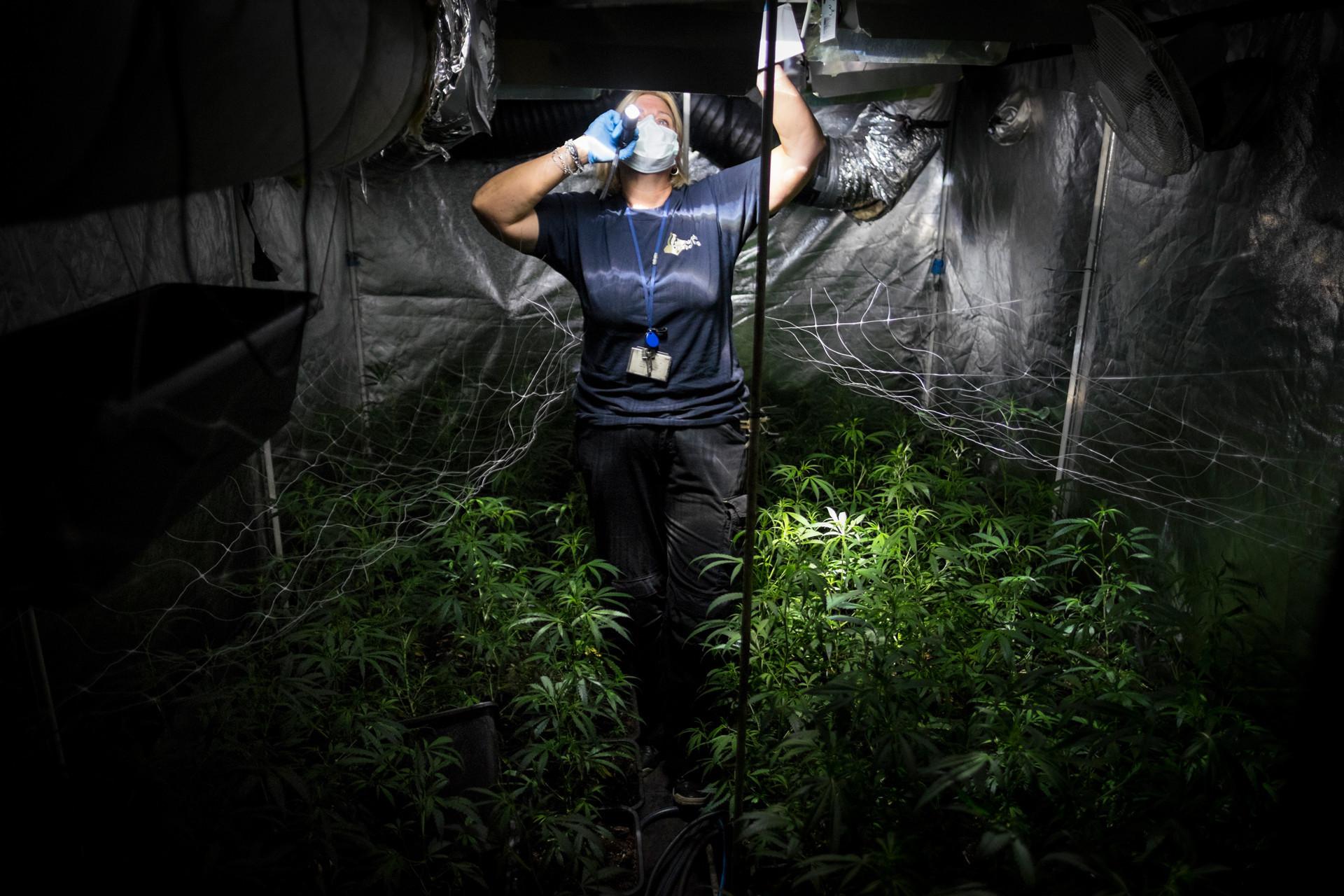 De politie rolt een wiet plantage in een woonhuis op. Hierbij worden DNA en vingerafdrukken veilig gesteld. Foto: David van Dam
