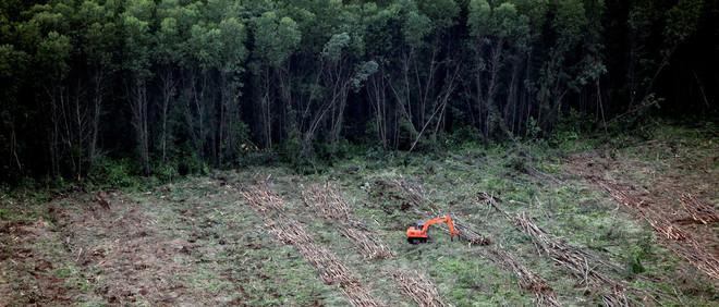 Een graafmachine verplaatst omgehakte bomen voor de productie van papier én om plek te maken voor een palmolie plantage. Sumatra, Indonesië. Foto: Donang Wahyu / HH