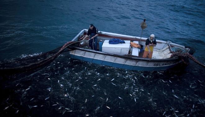 Vissers vangen sardientjes met ringzegen. Deze in Portugal gevangen sardientjes zijn de eerste in hun soort die binnen de grenzen van Europa het MSC-keurmerk kregen. Foto: Nacho Doce / Reuters