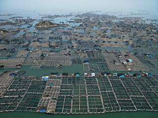 Marine Aquaculture #1, Lucyuan Bay, Fujian Province, China, 2012. Foto: Edward Burtynsky