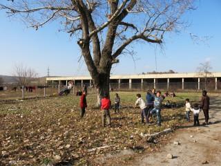 Kinderen hebben schommels gemaakt aan een boom in het kamp. Foto: Maite Vermeulen
