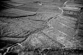 Papavervelden in de Keshm-vallei, Afghanistan. Foto: Paolo Pellegrin/Magnum Photos/HH