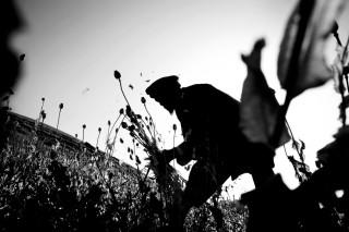 Een Afghaanse boer oogt papaver in de Badakshan-provincie. Foto: Paolo Pellegrin/Magnum Photos/HH