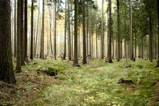 Het kunstwerk 'Forest' van Johannes Verwoerd.