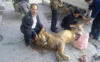Of het klopt is nooit geverifieerd, maar op deze foto zou te zien zijn hoe Syrische rebellen een leeuw villen, die afkomstig zou zijn uit de Al-Qarya al-Shama-dierentuin. In november 2013 werd dit beeld veelvuldig verspreid op sociale media.