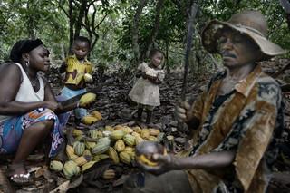 Deze cacaoboer in Ivoorkust werkt samen met zijn vrouw en elf kinderen op zijn plantage. Deze foto is onderdeel van de serie 'Cocoa trail: from the bean to the bar.' Foto: Kadir van Lohuizen/NOOR