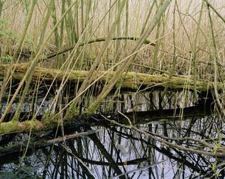 Zeebodemmoeras in het Natura 2000-natuurgebied Oostvaardersplassen in Flevoland. Foto: Sterre Sprengers