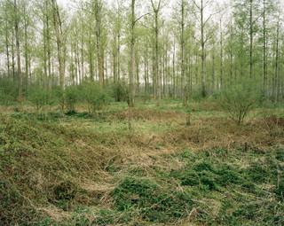 De Plateaux-Hageven, een Natura 2000-natuurgebied met unieke vloeiweiden, in Noord- en Zuid-Brabant (België). Foto: Sterre Sprengers