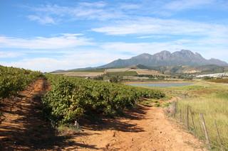 De velden van de Monterosso wijnboerderij. Beeld: Emma Lesuis