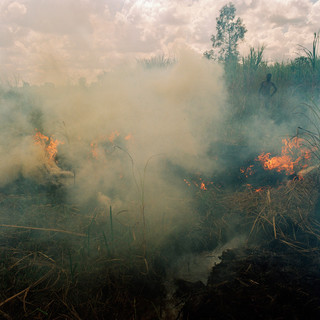 Het afbranden van een 'dimbo' (geïrrigeerde groentetuin) van inwoner van het dorp Dickisoni, om onkruid en ongedierte op te ruimen (2005). Foto: Jan Banning