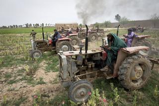 Leden van de Afghaanse Antidrugspolitie vernielen een papaverveld met tractors. Provincie Helmand, Afghanistan.