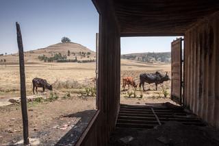 Het platgebrande melkveebedrijf van Harry Teuben. Foto: Petterik Wiggers / HH
