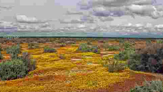 Screenshot van het project compressedlandscapes.com