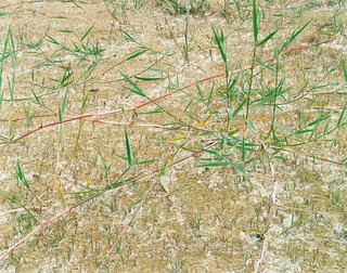 Kerf (2005). Foto: Wout Berger