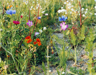 Roadside Flowers (2005). Foto: Wout Berger