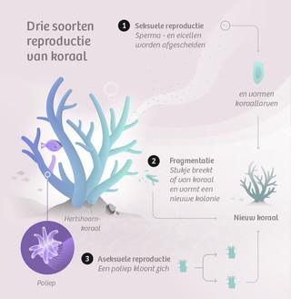 Infographic: Leon de Korte (redactioneel ontwerper bij De Correspondent)