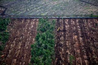 Ontbossing van het regenwoud in Sumatra (Indonesië). Foto: Kemal Jufri/AFP