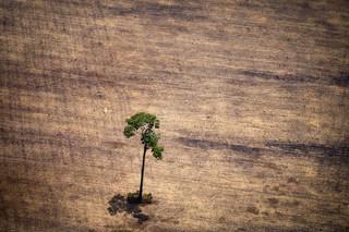 Ontbossing van het Amazonegebied in Brazilië. Foto: Raphael Alves/AFP