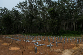 In a bumpy clearing in nearby Kampung Tualan lie the graves of 105 Rohingyas who did not survive the jungle camps. Photo by Andreas Staahl