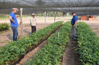 Dit is een kwekerij van ArBolivia waar de jonge tejeyeque-bomen worden gekweekt die boeren kunnen planten tussen hun gewassen. Foto's: Bart Crezee