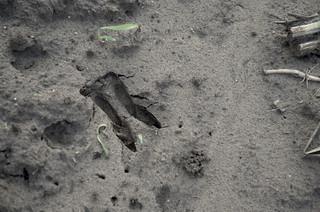 Afdruk van een hazenpoot in het zand. Foto: Nadine Maas / Hollandse Hoogte