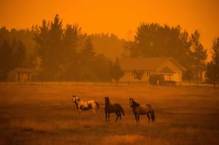 Dikke rook vult de lucht in Vanderhoof, Canada, 22 augustus 2018. Foto: Darryl Dyck / HH