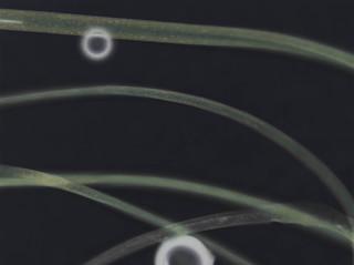 Microscopische foto van synthetische microvezels in verschillende kledingstukken, gemaakt in een laboratorium. Foto: Lisa van Casand (voor De Correspondent)