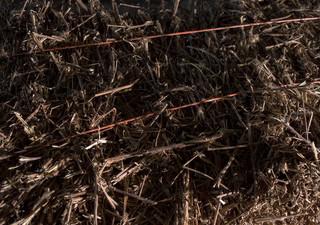 Voor De Correspondent legde fotograaf Daan Paans de sporen van het bedrijf Brennels (later Netl) vast, waar tot 2013 brandnetelvezels geproduceerd werden.