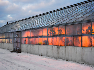 Geneva Greenhouses, New York State Agricultural Experiment Station, New York 2013. Foto: Lucas Foglia