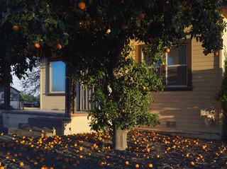 Sinaasappels, Californië 2011. Foto: Lucas Foglia