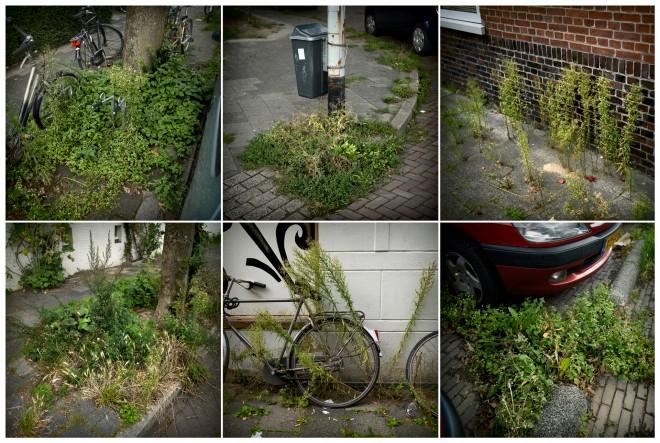 Slecht groenonderhoud in de stad Groningen. Foto: Kees van de Veen/Hollandse Hoogte