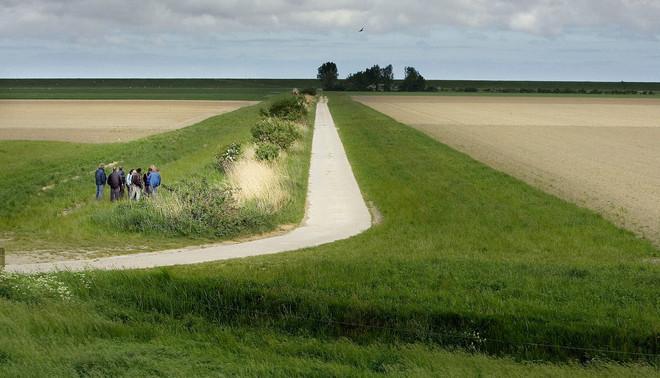 De provincie Groningen subsidieert boeren om de akkers langs hun randen te voorzien van gevarieerde vegetatie, wat het nestelen van bijzondere vogels weer ten goede komt. Foto: Reyer Boxem / HH