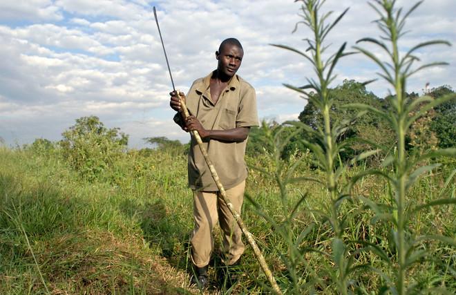 Een man uit het Kibaledistrict in Oeganda maakt het land klaar voor een project van de Nederlandse stichting FACE (Forests Absorbing Carbon dioxide Emissions). Foto: Frederic Courbet / Panos Pictures