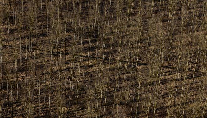 Aanplant van jonge bomen bij Geldermalsen. Foto: Siebe Swart / Hollandse Hoogte