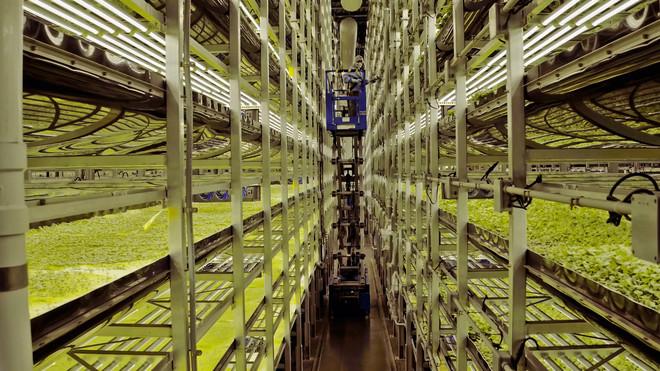 Still uit de documentaire 'Boer zoekt voedselflat.'