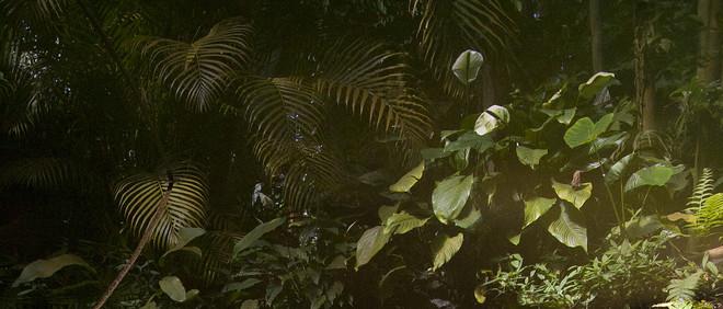 Planten in de Hortus Botanicus in Amsterdam. Foto: Amber Toorop (voor De Correspondent)