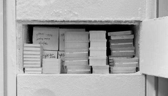 Een vriezer vol monsters, verzameld voor het Human Genome Project. De monsters zijn gebruikt in het onderzoek naar twaalf gezondheidsproblemen, waaronder alcoholisme, alzheimer, bipolaire stoornis, borstkanker en HIV. Uit de serie 'Art & Science: Investigating Matter' door Catherine Wagner.
