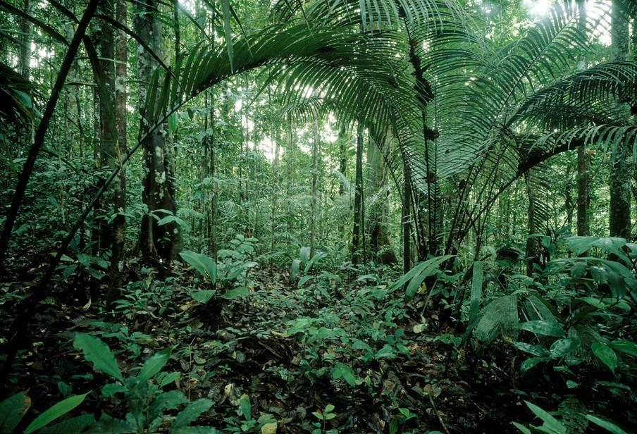 Oerwoud in Frans Guyana. Foto: Fred Hoogervorst/Hollandse Hoogte