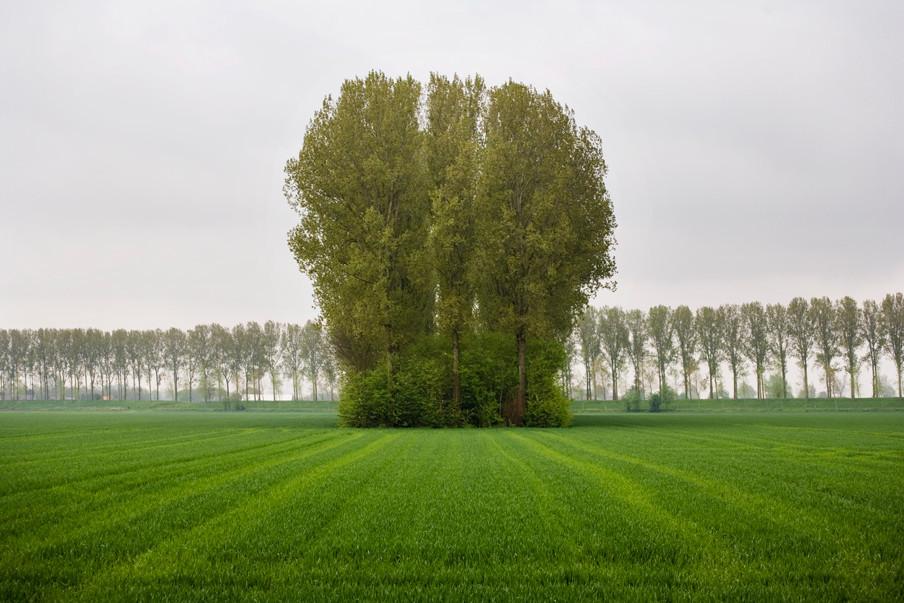 De Hedwigepolder met uitzicht op het Belgische gedeelte van het natuurgebied. Foto: Rob Huibers / Hollandse Hoogte