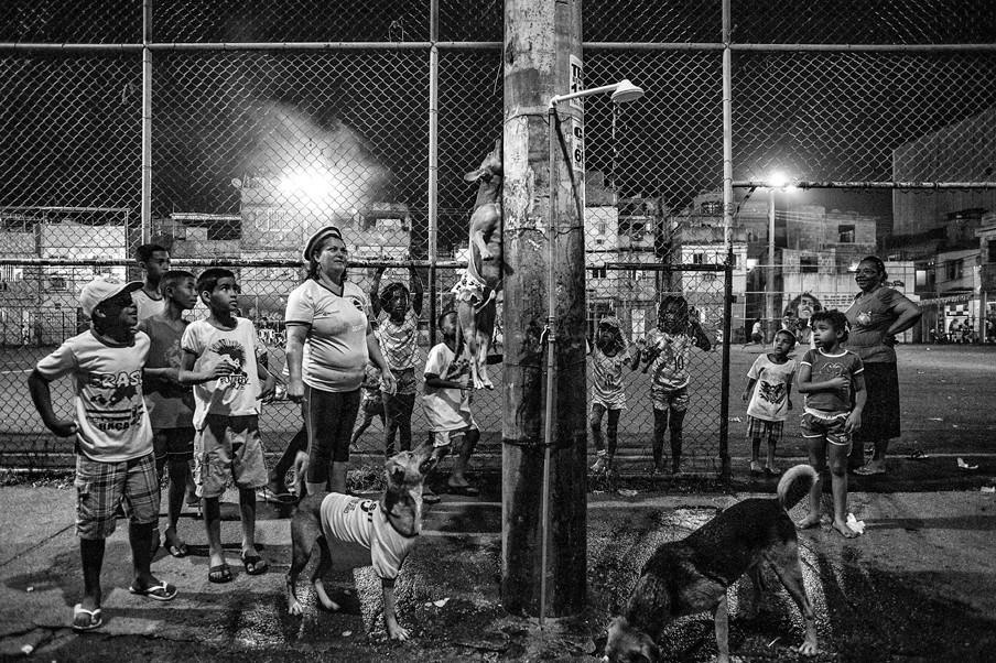 Honden in de wijk Complexo da Marè in het noorden van Rio de Janeiro. Foto's: Alessandro Falco