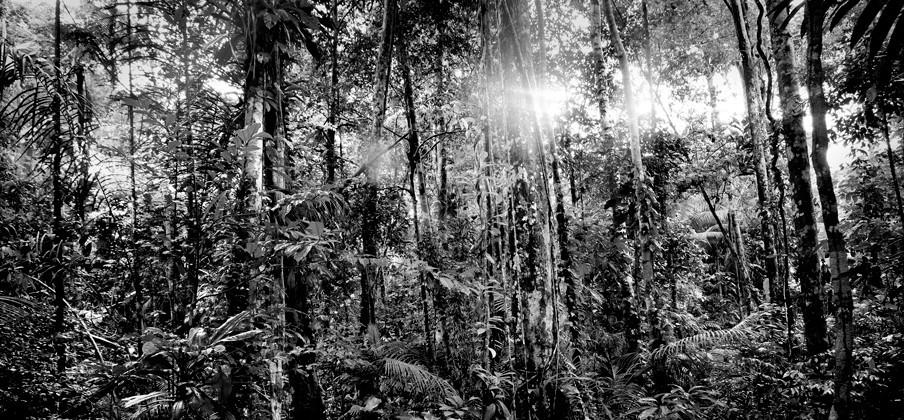 Het Amazoneregenwoud in Colombia. Foto: Mads Nissen / HH
