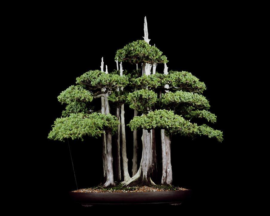 Untitled #4, The Bonsai Project: Typology. © Sjoerd Knibbeler en Rob Wetzer