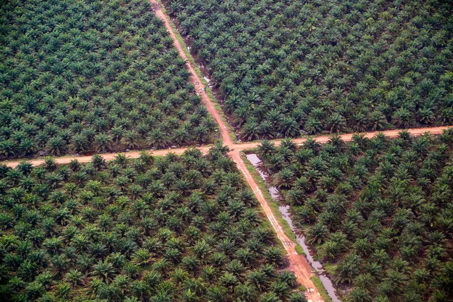 Palmolie plantage waar vroeger regenwoud was in Sumatra (Indonesië). Foto: Ulet Ifansasti/Getty Images