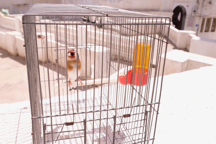 Een vogeltje in een kooi in de Kasbah van Algiers