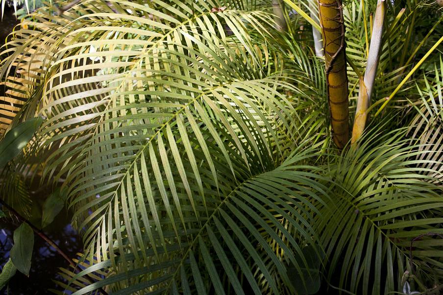 Planten in de Hortus Botanicus. Foto: Amber Toorop (voor De Correspondent)