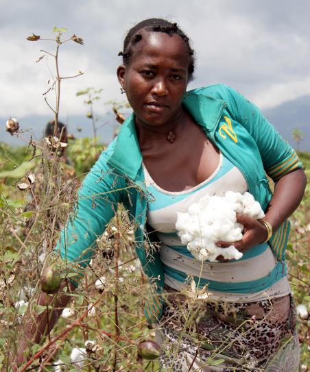 Katoenplukker op de velden van AMIBARA. Foto: Martijn Payens